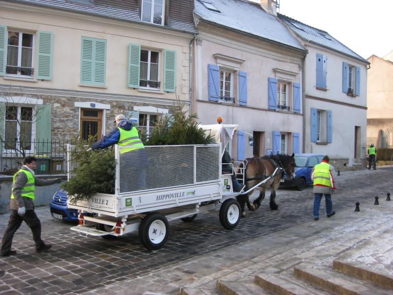 Collecte des sapins de Noël - St Prix (95) - Jan 2010