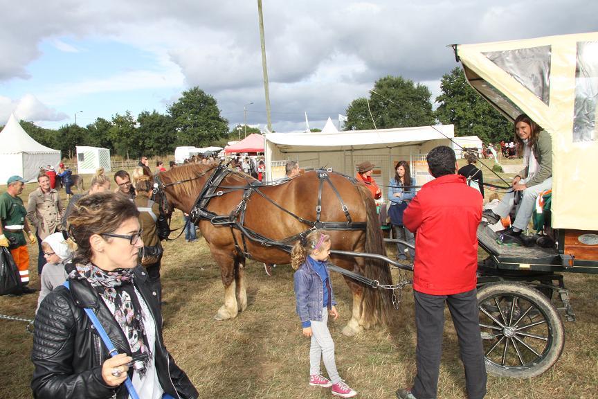 Participation de l'équipage des Gayeulles à la fête du cheval, de l'äne et du poney, Rennes La Prevalaye sept 2013