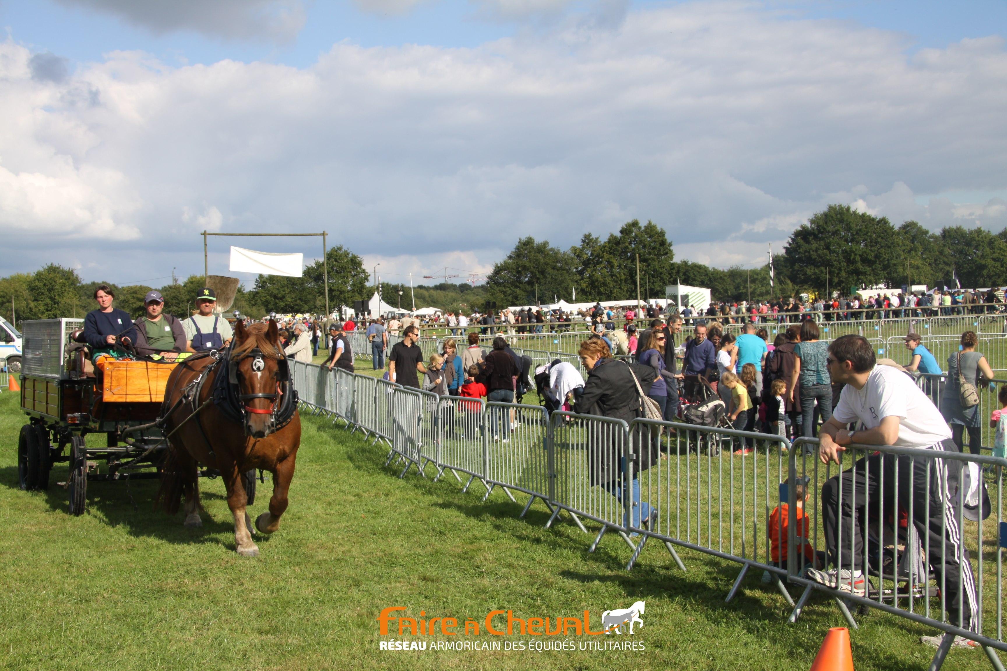 Fête du cheval 2015 - L'attelage des Gayeulles de la ville de Rennes participe au parcours urbain