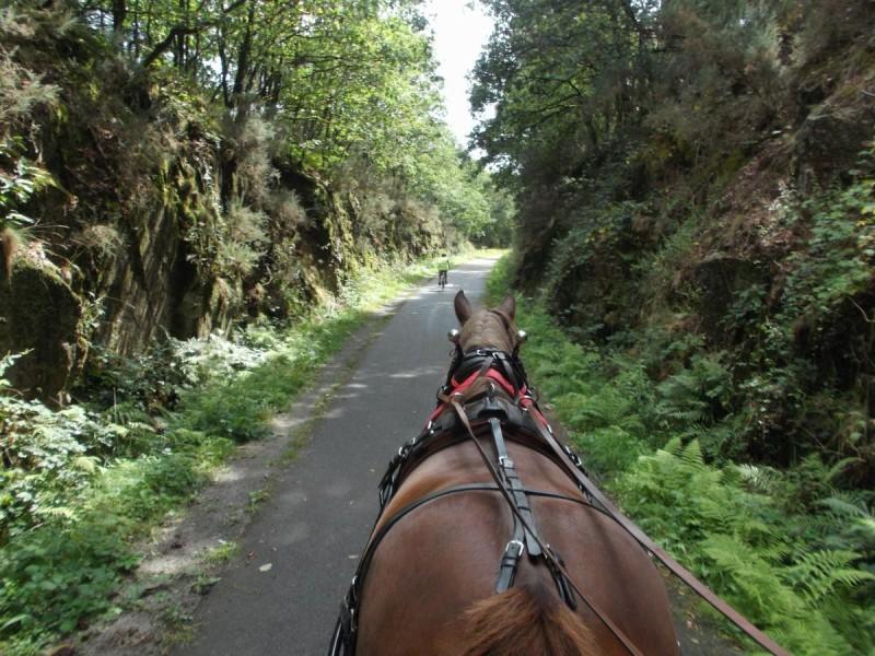 Cheval et vélo en route
