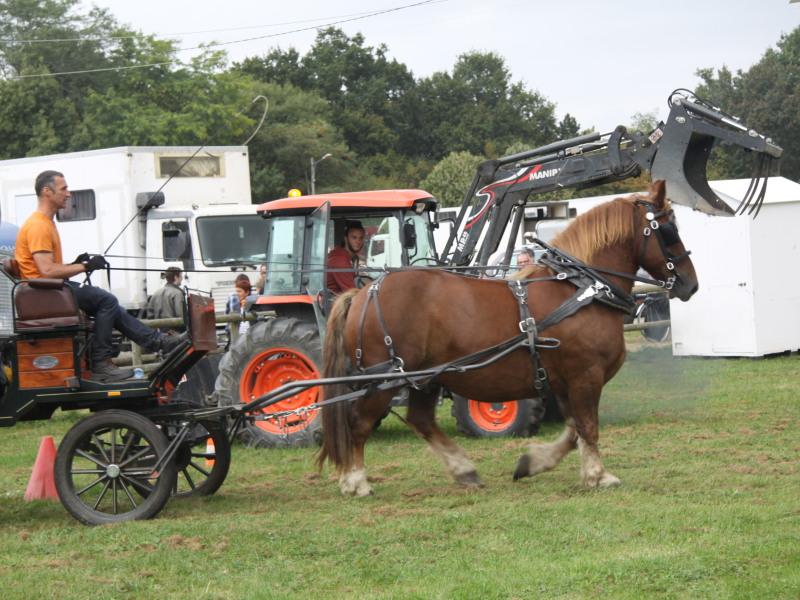 Simulation de parcours urbain - Le cheval côtoie le tracteur