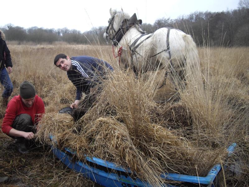 Chantier d'arrachage d'herbes envahissantes - Étang d'Hédé Bazouges (35) - Fév 2011
