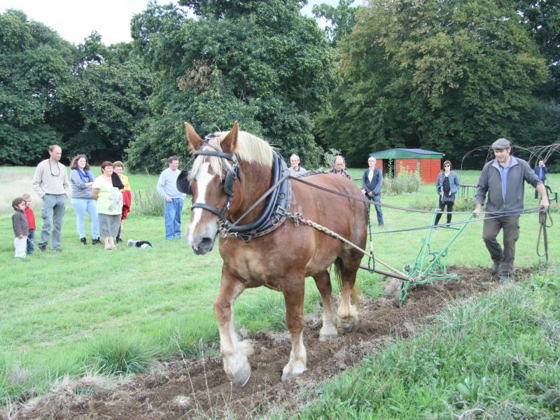Stéphane Galais, formateur en traction animale installé à La Boussac et Légende, jument trait breton de 16 ans, effectuent, devant un public intéressé, une préparation de sol au jardin des Mille Pas.
