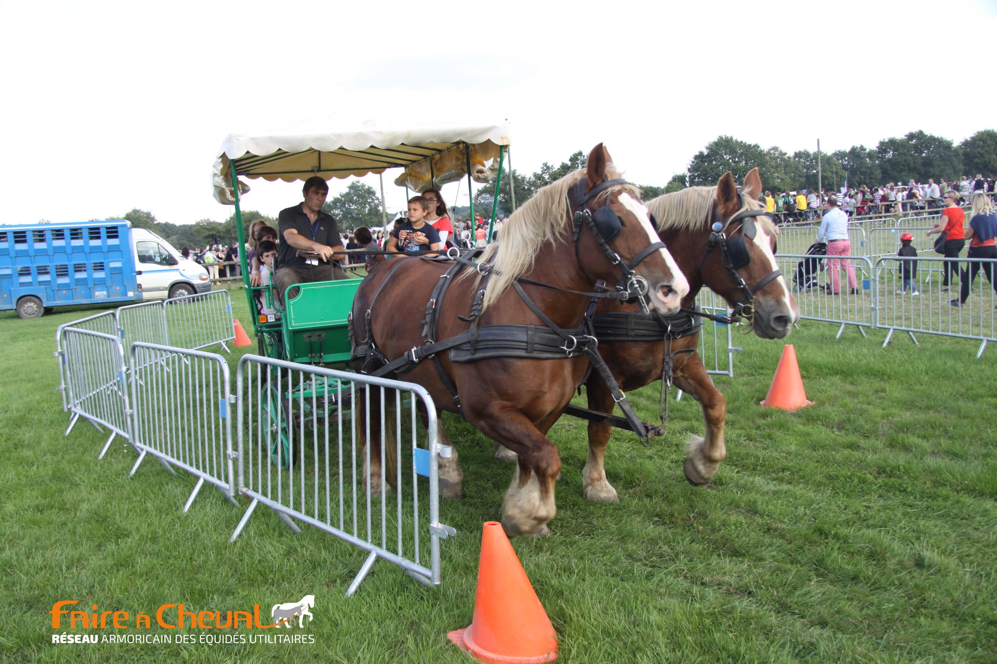 Attelage en paire sur le parcours urbain - Fête du cheval Rennes La Prevalaye 2015