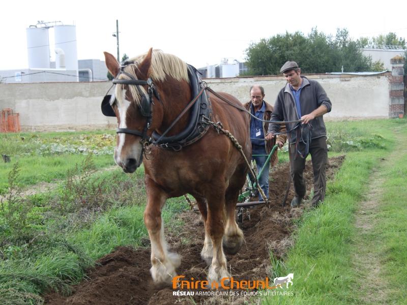 Démonstration de travail agricole au jardin des Mille Pas