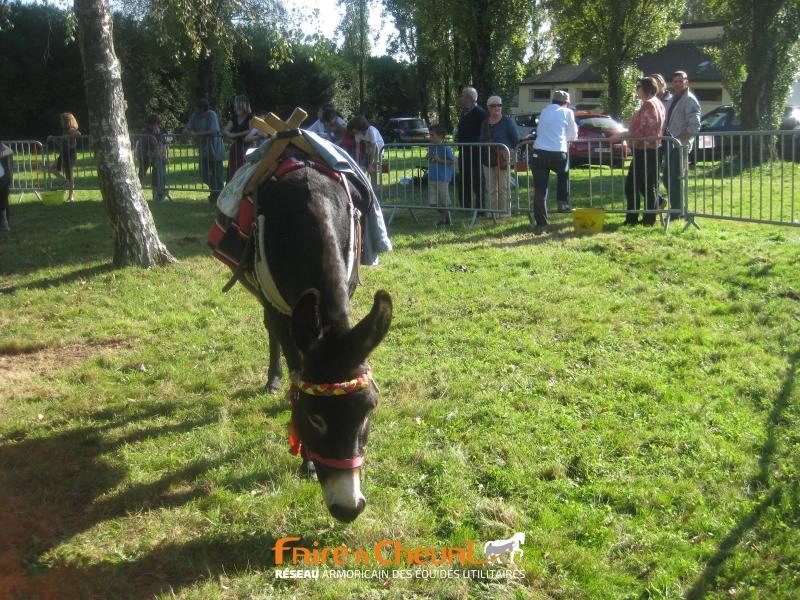 Le coin des ânes, avec l'association Kerant'ânes