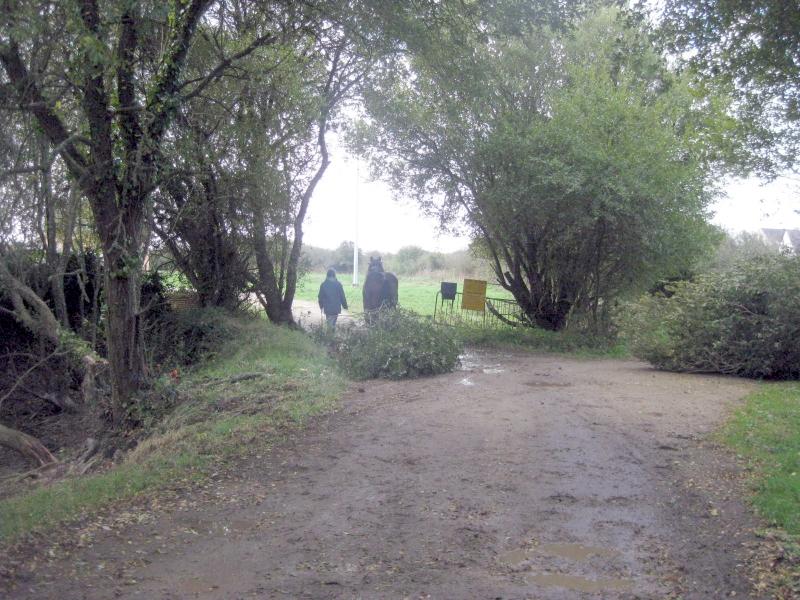 Transport du bois jusqu'au lieu de récupération