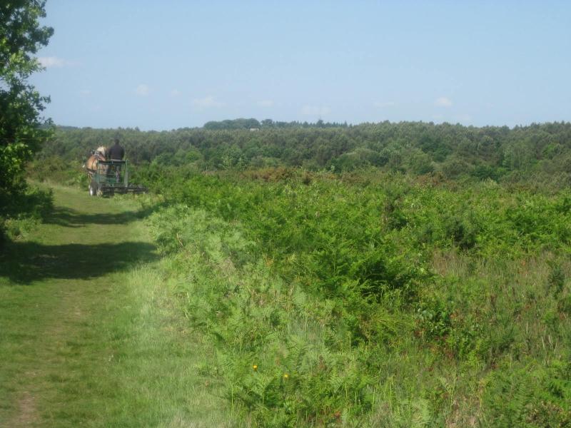 Chantier brise-fougères mené par le conseil départemental d'Ille et Vilaine - 2015