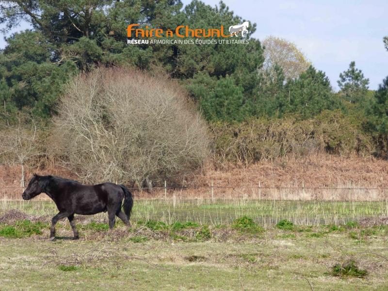 Jarnac, poney new-forest, agent d'entretien du parc océanique