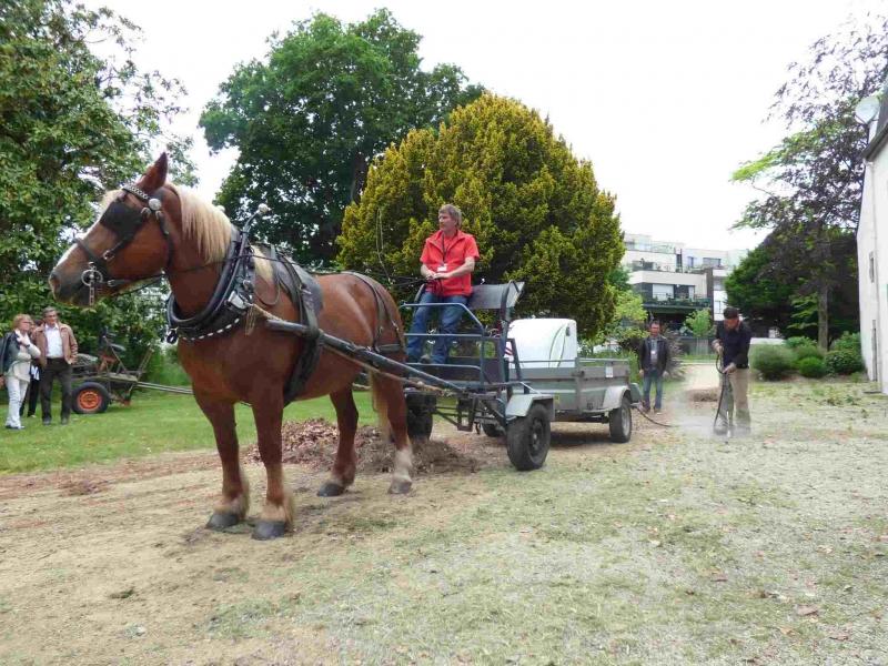 Désherbage à l'eau chaude avec le cheval, par le SMATAH et Ar Maner