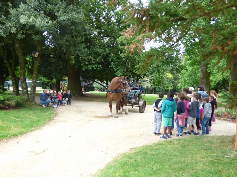 Azur, vedette d'un jour du parc de Kerbihan à Hennebont