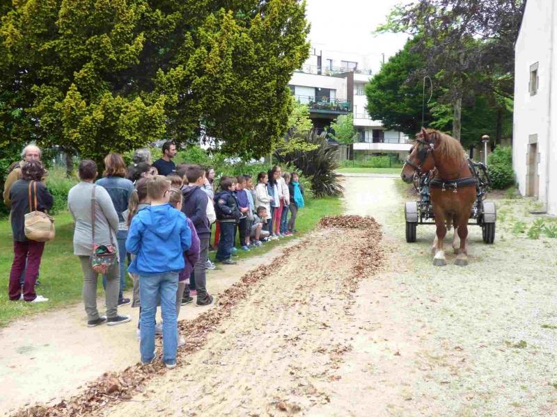 Démonstration de ratissage pour les scolaires, par Azur, le cheval territorial de Lorient Agglomération