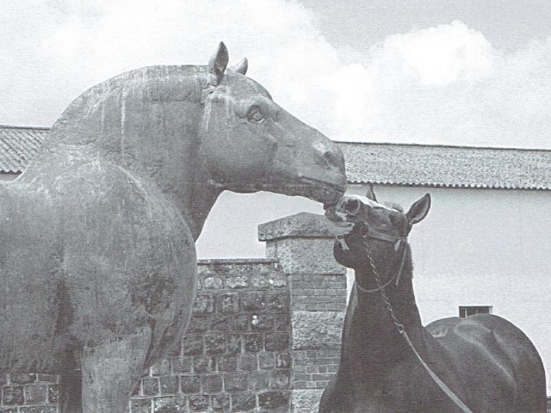 1986 - Station de Callac - l'étalon Océanic auprès de la statue du grand ancêtre (Photo Le Berre)