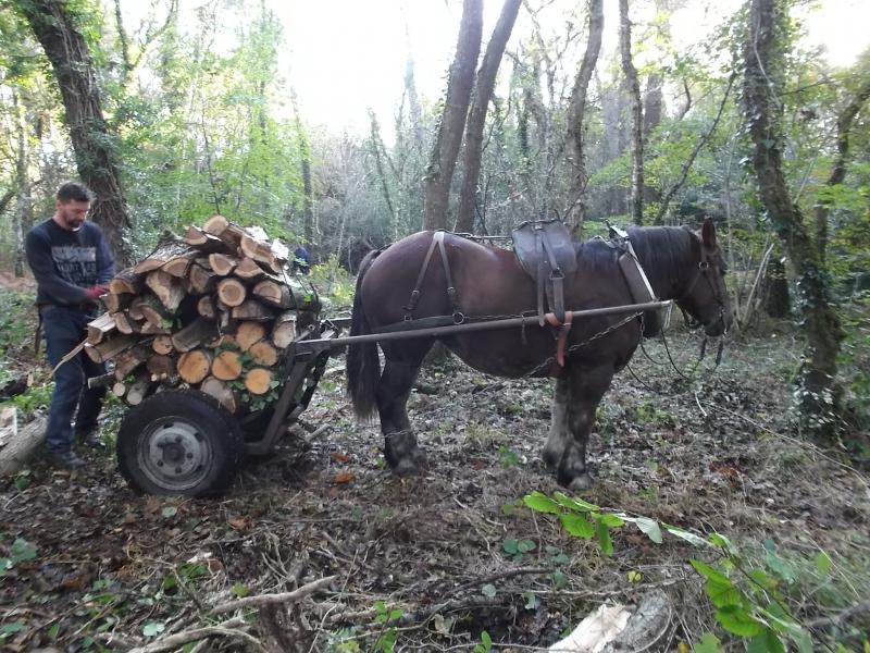 Pleumeur Bodou et ONF - Bois de chauffage