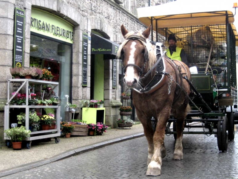 Collecte de sacs jaunes - Questembert (56)