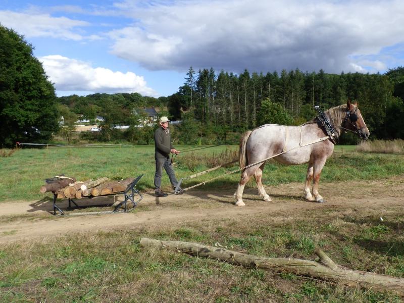 Démonstration de transport de bois avec luge