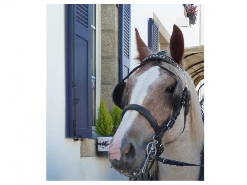 Cheval territorial breton à Pont-Aven