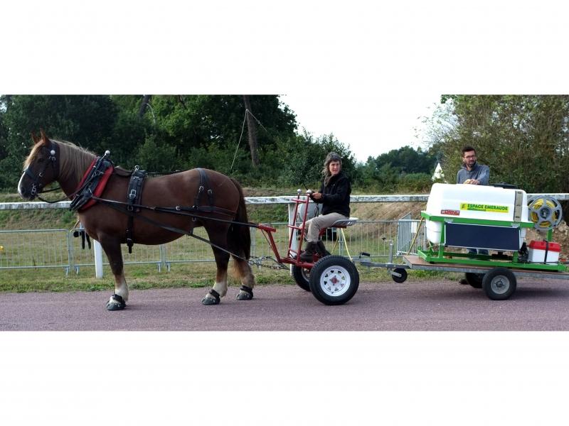 Démonstration lors de la fête du cheval de Questembert - 2016
