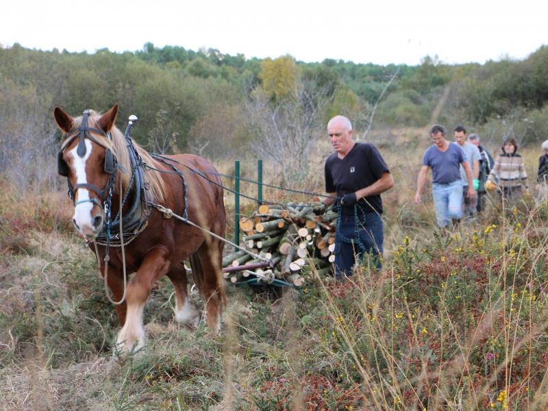 Pierrick Joyaux, des Sentiers du Riellec, avec son cheval breton