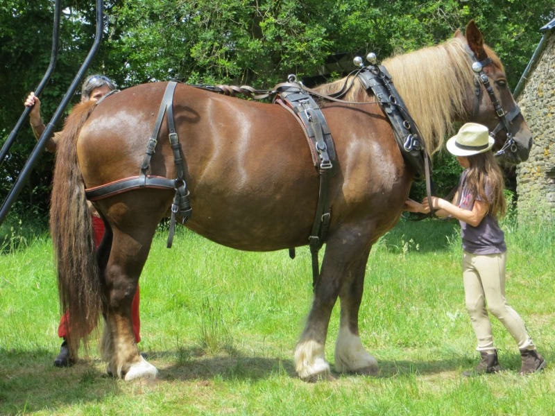 Jument de trait bretonne   Faire à cheval