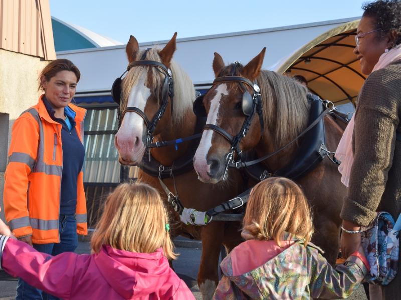 La meneuse de Questembert avec la paire de chevaux bretons de la ville
