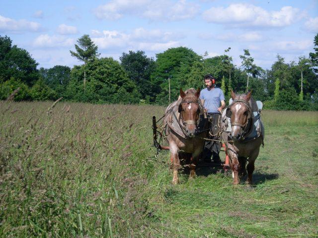 Dominique Bourdon au travail avec sa paire de chevaux bretons