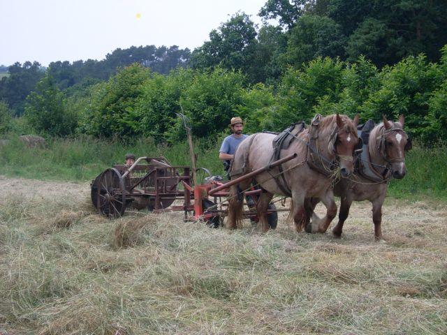 Dominique Bourdon et sa paire de chevaux bretons