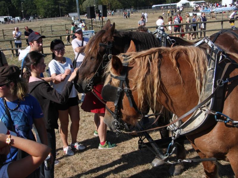 Beau succès des chevaux de la brigade hippomobile bretilienne