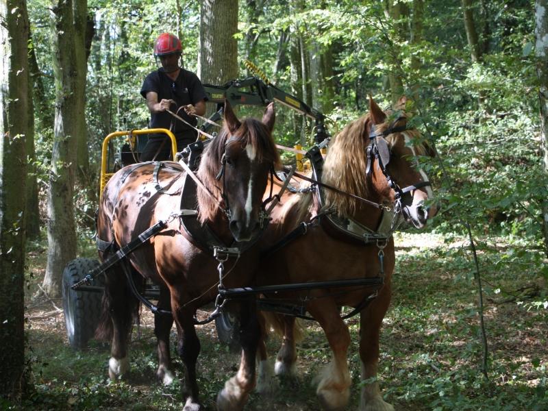 Une paire tractant le porteur forestier