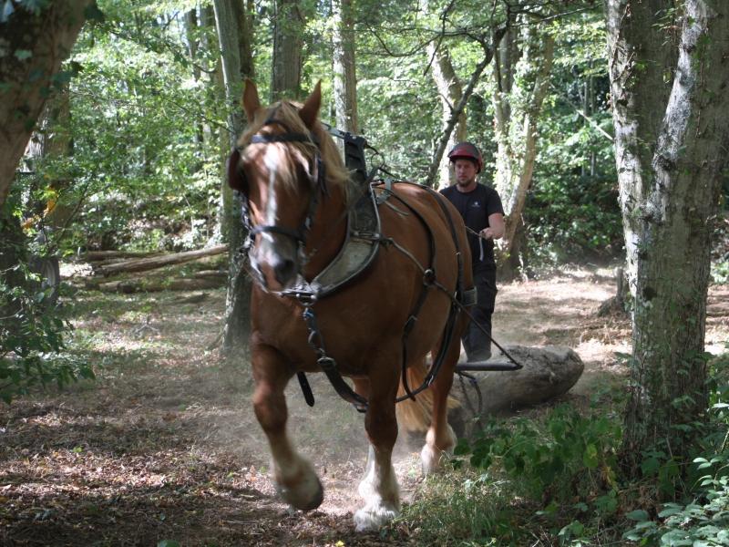 Démonstrations à la fête du cheval de Rennes La Prevalaye