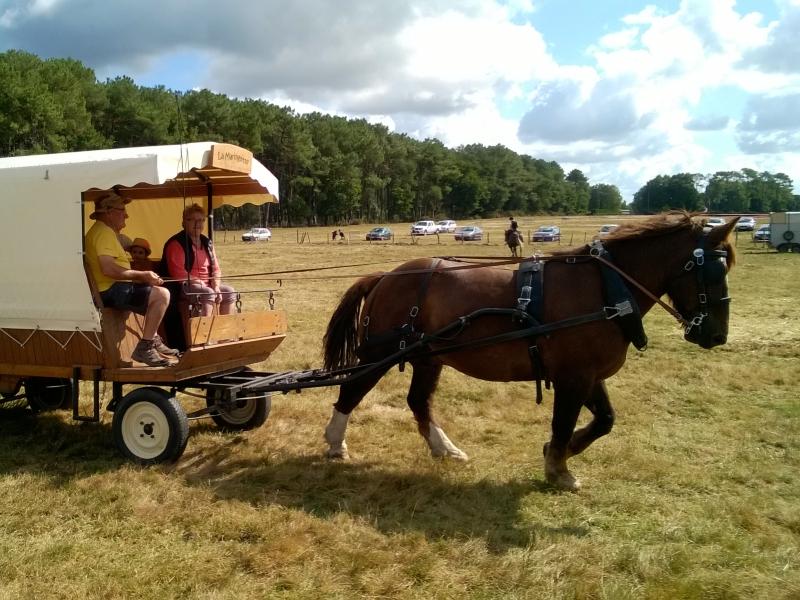 Le cheval est facilement sollicité pour participer aux fêtes locales